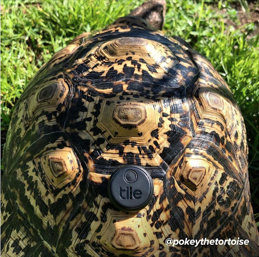 Top Tile Tales of 2019 - Pokey The Tortoise