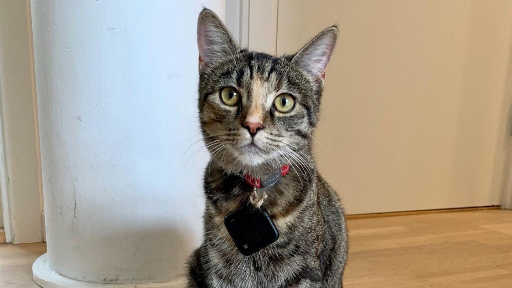 Tile's Pet Tracker Finds Lost Pets