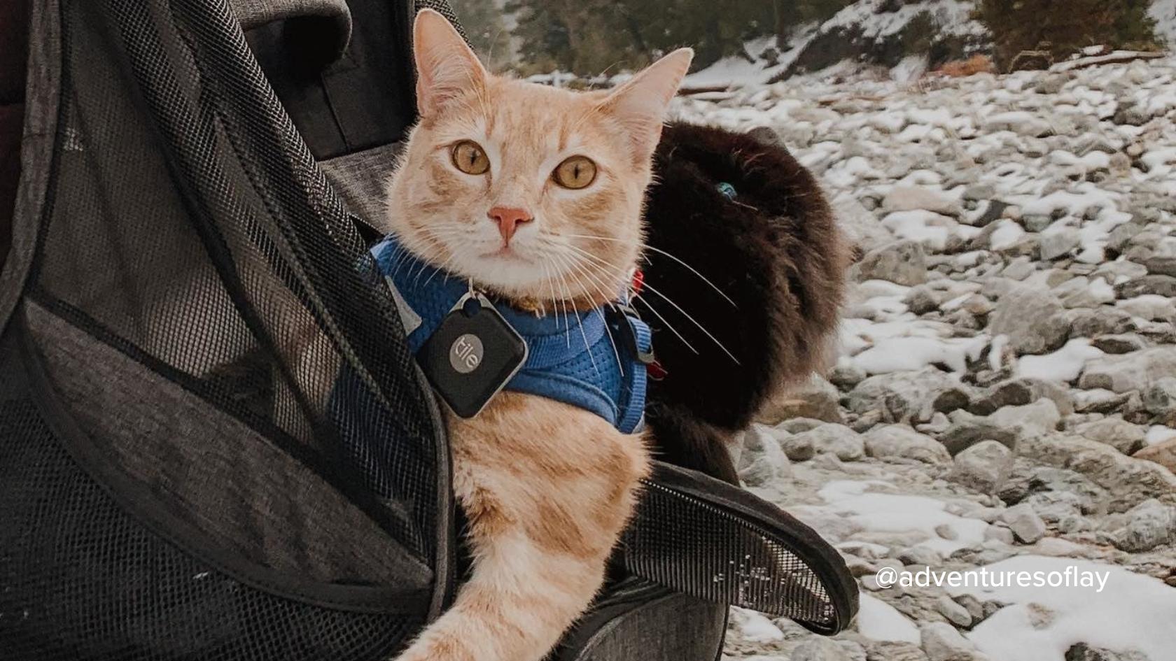 Tile's Cat Tracker