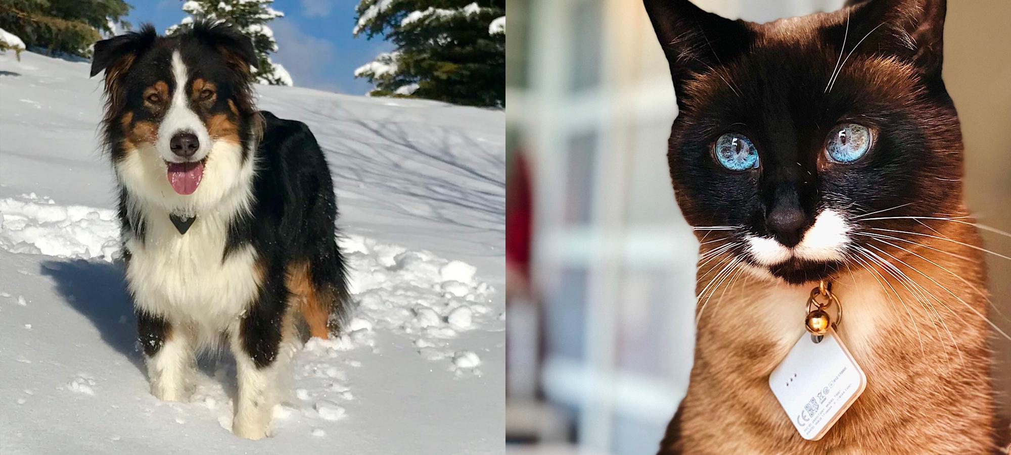 Pets 2 Blog 1
