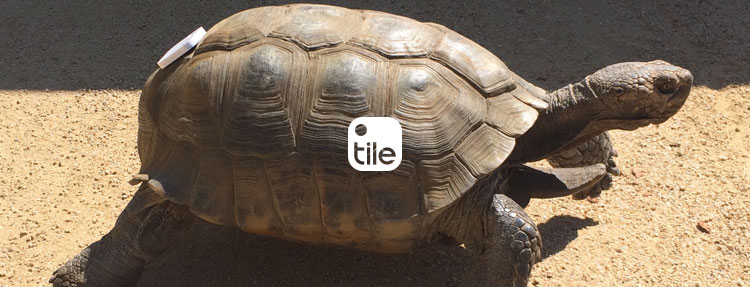 Tile App - Turtle Pet Locator