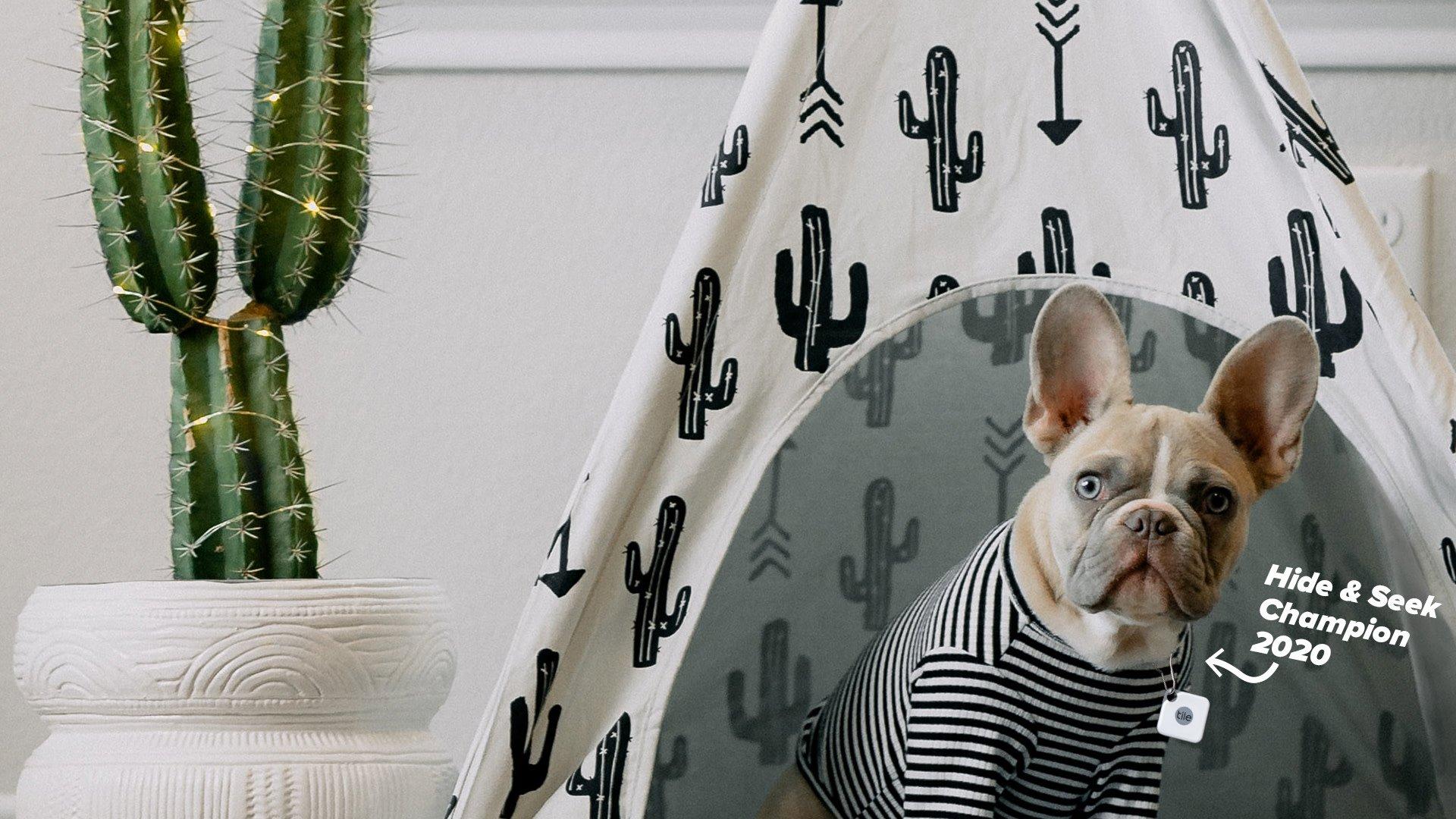 Zoom Backgrounds dog