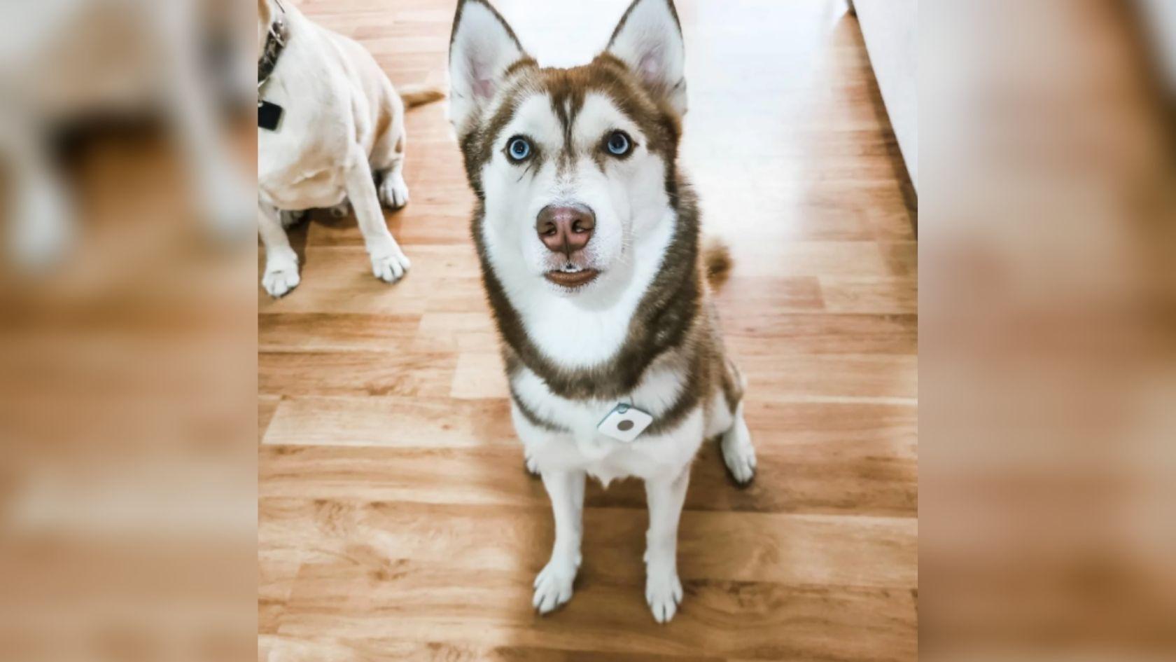Blog   Bluetooth Pet Tracker